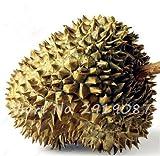 10 Stück Durian Samen Köstliche King Of Tropical Gesunde Obstbäume Riesengartenpflanzen Bonsai-Baum Nicht-GVO hoher Nahrung 7