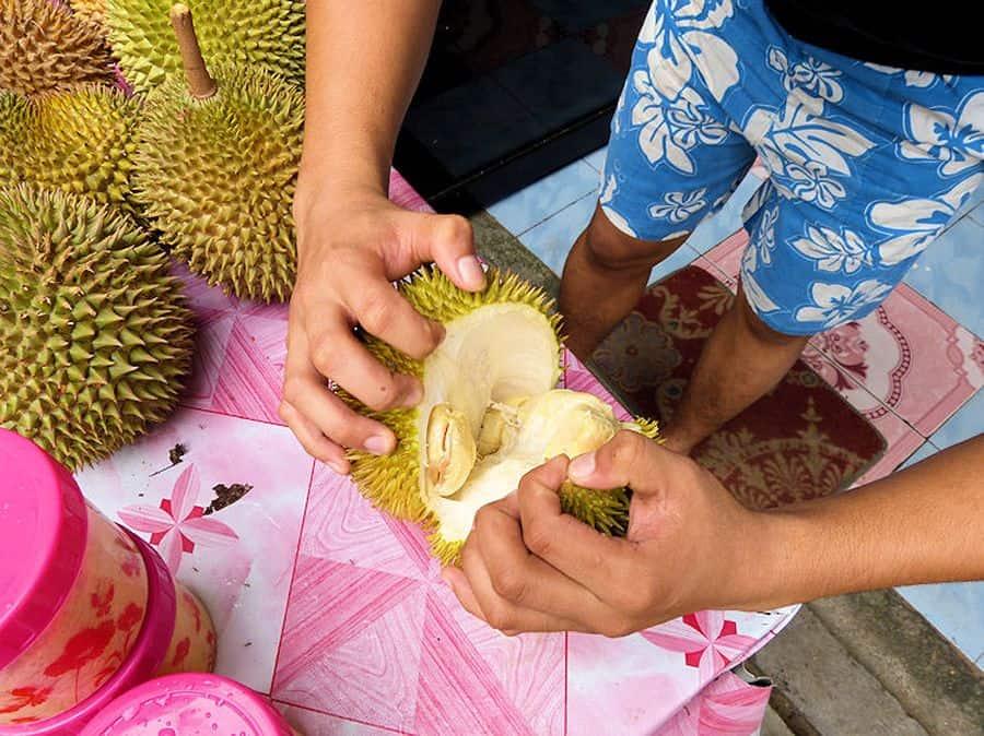 Prüfung der Reife einer Durian Frucht