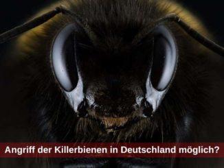 Anfriff der Killerbienen in Deutschland