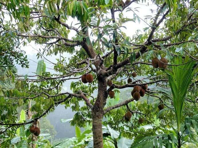 tioman-urlaub-malaysia-bild-140