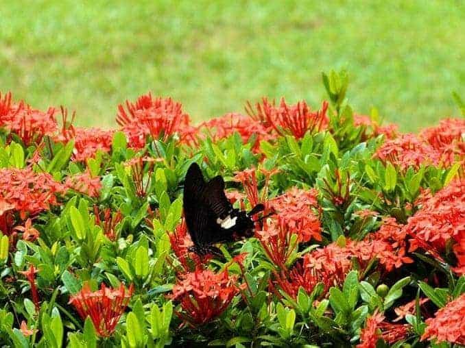 tioman-urlaub-malaysia-bild-257