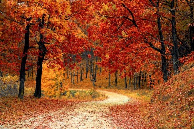 Freizeitideen für den Herbst