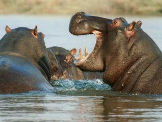 Namibia erleben