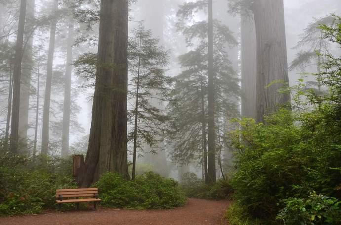 Wald USA