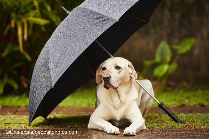 Dogfun :-) Hund mit Regenschirm