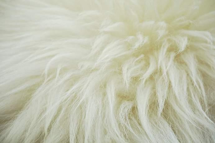 Typische Schafswolle