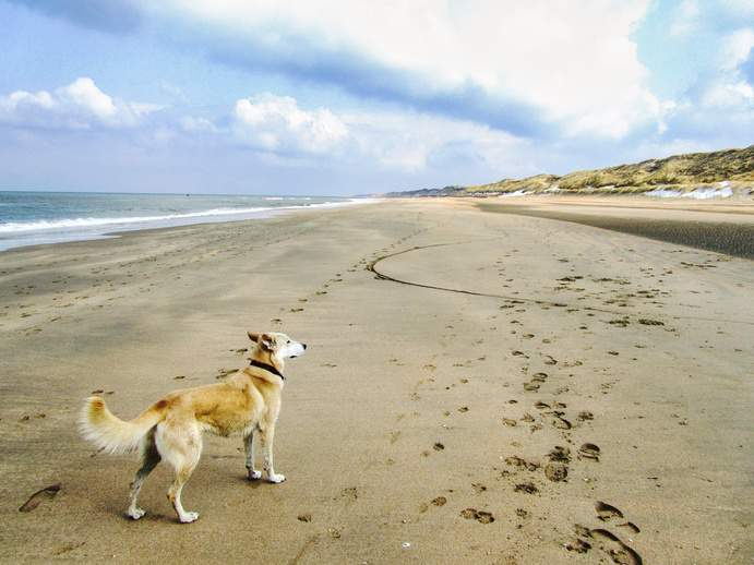 Holland am Meer mit Hund